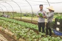 Hỗ trợ phát triển mạnh hợp tác xã