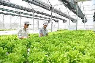 Góp phần định hình lại nền nông nghiệp