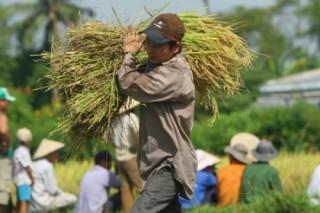 TP.HCM: Mỗi năm 3.413 hộ dân, doanh nghiệp vay vốn làm nông nghiệp
