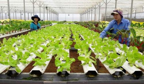 Tháo gỡ để cho vay nông nghiệp sạch