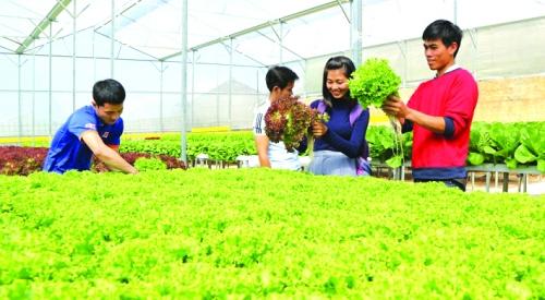 Gỡ nút thắt cho nông nghiệp công nghệ cao (Kỳ I)