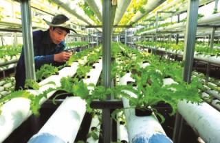 Gỡ nút thắt cho nông nghiệp công nghệ cao (Kỳ II)
