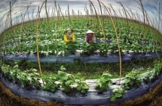 Nông nghiệp đột phá