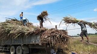Ngân hàng gỡ khó cho ngành mía đường