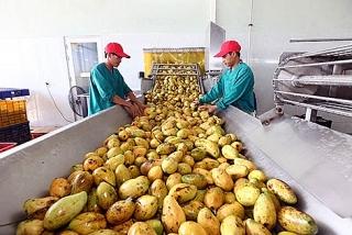 Cơ hội từ thị trường mới cho rau quả