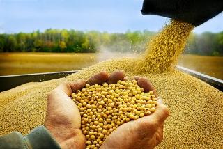 Trung Quốc nhập khẩu đậu nành từ Mỹ tăng cao