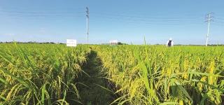 Nông nghiệp Việt: Nhìn lại để phát triển