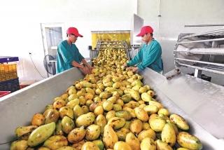 Nông sản tăng giá, nhà nông vẫn khó