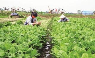 Liên minh Hợp tác xã Việt Nam: Đổi mới hoạt động kinh tế tập thể