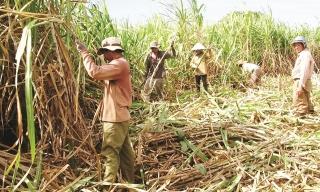 Tăng sức bật cho nông nghiệp Gia Lai