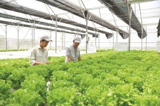Phát triển nông nghiệp công nghệ cao vẫn gặp nhiều rào cản