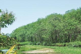Chi trả dịch vụ môi trường rừng phát huy hiệu quả