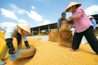 13 nông sản vào danh mục sản phẩm nông nghiệp chủ lực quốc gia