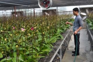 Hà Nội cơ cấu lại ngành nông nghiệp