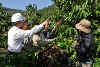 Động lực để nông nghiệp phát triển bền vững