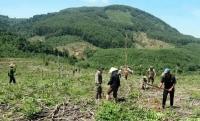 Tăng cường quản lý đất có nguồn gốc từ các nông, lâm trường quốc doanh