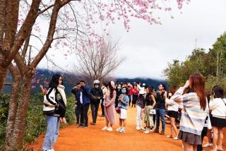 Nhiều địa phương đón lượng khách du lịch tăng vọt dịp Tết Dương lịch