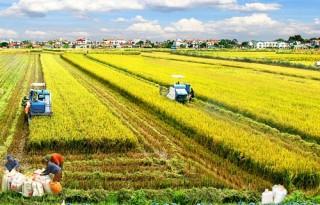 Hà Nội: Phát triển công nghệ sinh học nông nghiệp, thủy sản đến năm 2030