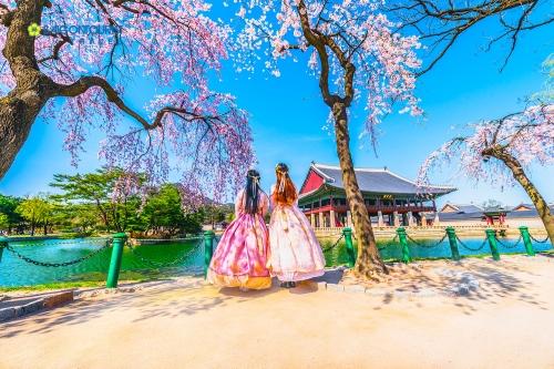 Du xuân Hàn Quốc, cảm nhận sự khác biệt