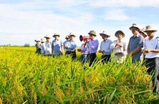 Đề xuất sử dụng kinh phí sự nghiệp thực hiện hoạt động khuyến nông