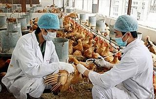 TP.HCM tăng cường xử lý triệt để dịch bệnh gia súc gia cầm