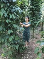 Quảng Bình: Thoát nghèo từ đồng vốn chính sách