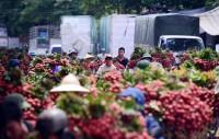 Vài Bắc Giang tiêu thụ đạt gần 144,2 nghìn tấn