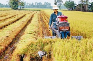 Nông nghiệp duy trì đà tăng trưởng cao