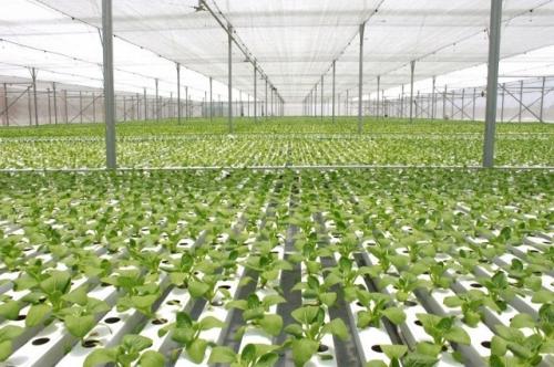 Đề xuất tiêu chí xác định dự án nông nghiệp ứng dụng công nghệ cao