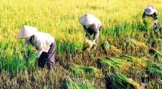 Hơn 34ha đất lúa chuyển đổi sang phi nông nghiệp