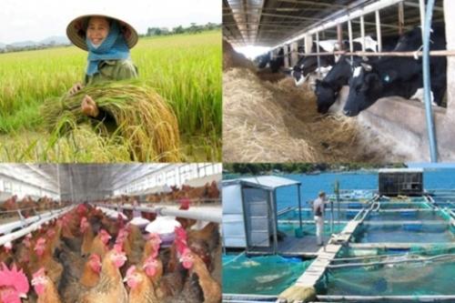 Chính sách hỗ trợ bảo hiểm nông nghiệp: Cao nhất đến 90%