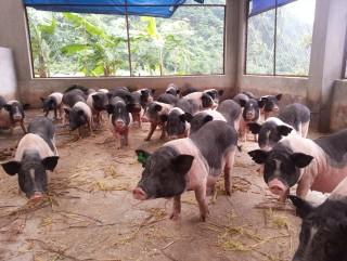 Ngân hàng bơm vốn cho giống đặc sản