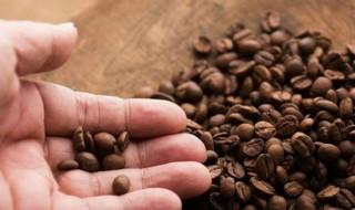 Cà phê Việt: Bỏ ngỏ chế biến sâu cho khối ngoại
