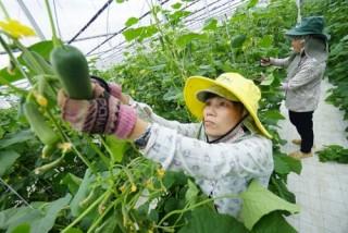 Nông sản hội nhập CPTPP: Giai đoạn đầu sẽ khó cạnh tranh