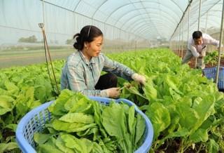 Hà Nội: Phấn đấu đến năm 2025 có 2.052 hợp tác xã