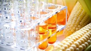 Điều tra áp dụng biện pháp CBPG đối với đường lỏng chiết xuất từ tinh bột ngô