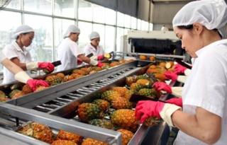 Nông nghiệp xuất siêu 6,04 tỷ USD 8 tháng đầu năm.