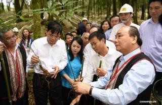 Thủ tướng: Cần hướng mục tiêu phát triển sâm Ngọc Linh đến những giá trị cao hơn