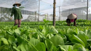 Nông sản hữu cơ có tiềm năng để xuất khẩu