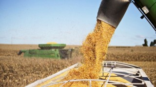Giá thực phẩm thế giới giảm trong tháng 8
