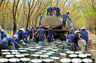 Chiến tranh thương mại: Cơ hội với cao su Việt và những lưu ý