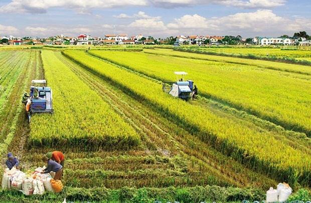 Khuyến khích tập trung, tích tụ đất nông nghiệp