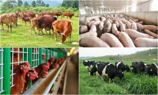 Phê duyệt chiến lược phát triển chăn nuôi tầm nhìn đến 2045