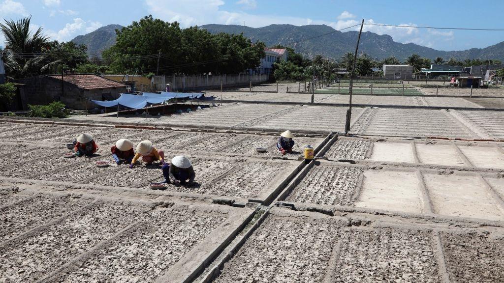 ADB giúp hiện đại hóa hệ thống thủy lợi, cải thiện năng suất nông nghiệp