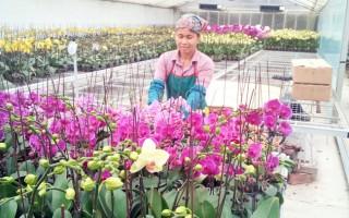 Hà Nội phát triển 133 mô hình ứng dụng sản xuất nông nghiệp ứng dụng công nghệ cao