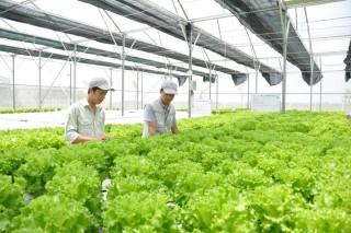 Hà Nội: Tái cơ cấu ngành nông nghiệp theo hướng nâng cao giá trị