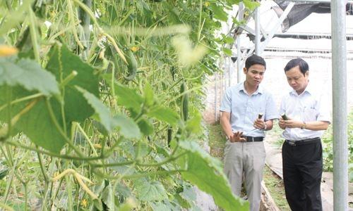 Hà Nội: Nhiều mô hình sản xuất nông nghiệp nông thôn phát triển hiệu quả