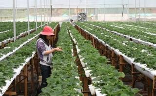 Tiêu chí xác định dự án ứng dụng công nghệ cao trong nông nghiệp