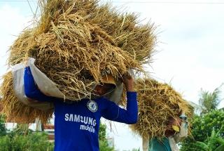 Ngon nhất thế giới, gạo Việt vẫn sẽ gặp khó trong năm 2020