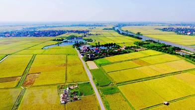 Bất động sản nông nghiệp chưa vận hành theo cơ chế thị trường
